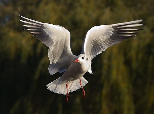Bird_Hamdy